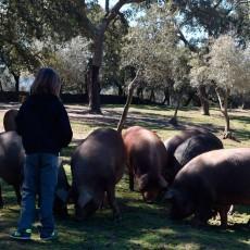 Visita la Dehesa – Ruta del jamón ibérico en Aracena